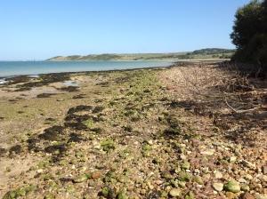 shoreline jpeg