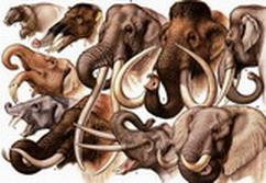 ELEPHANT-IMAGOLUTION
