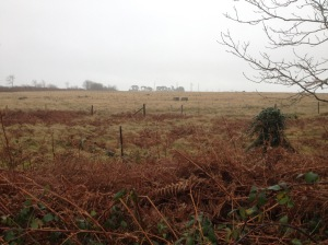 Rampisham photo