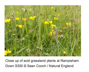 Rampisham close up