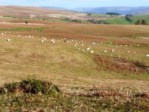 Sheep May Not Safely Graze