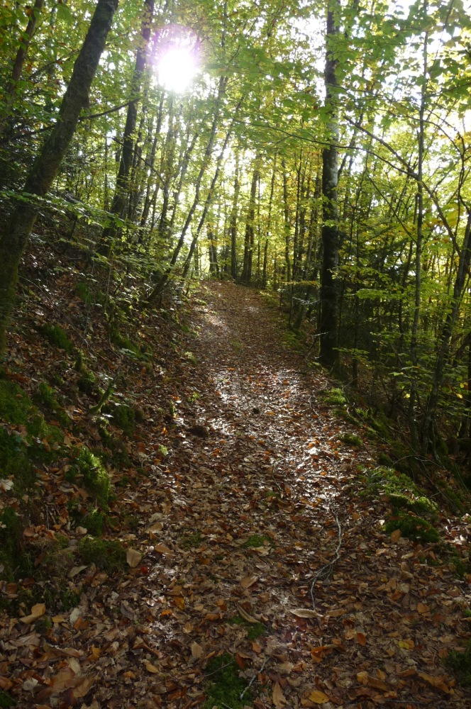 More tales from Natural Capital Wonderland: Woodlands and Badgers